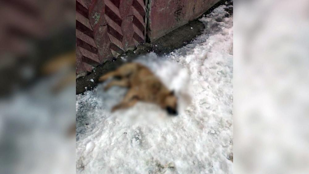 Погибшая бездомная собака