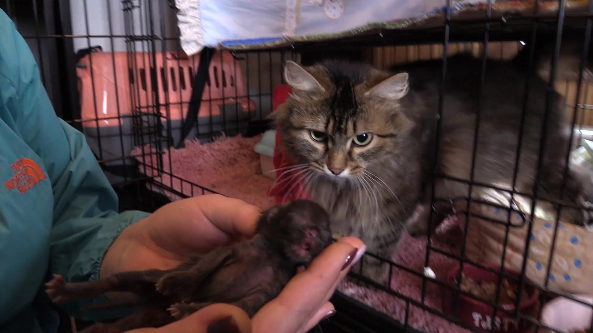 Котенок и кошка в приюте