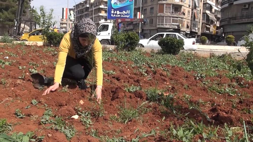Высадка саженцев в Сирии