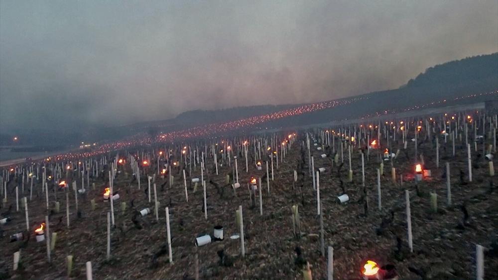 Спасение виноградников от заморозков во Франции
