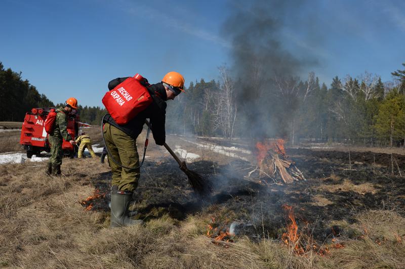 Тренировка по тушению лесных пожаров
