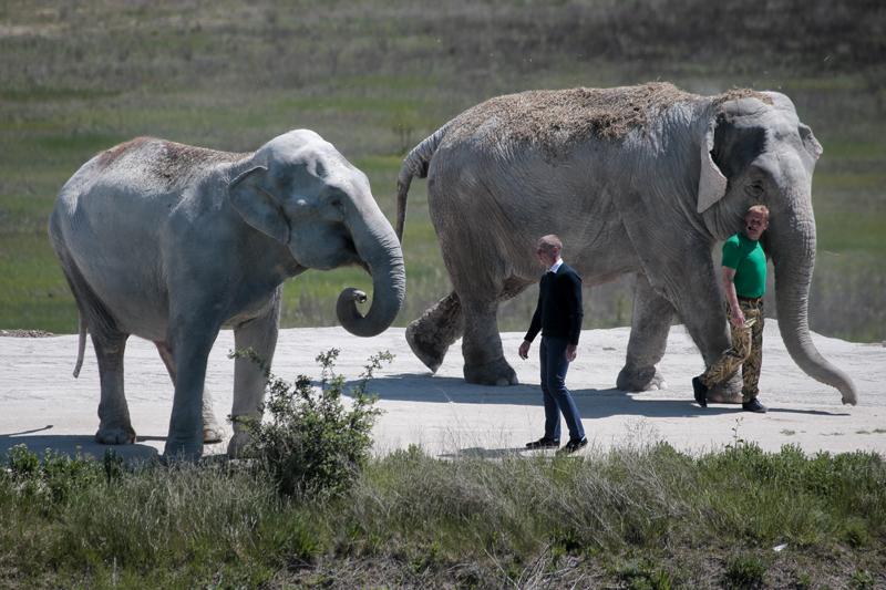 """Открытие вольера для слонов в парке """"Тайган"""" в Крыму"""