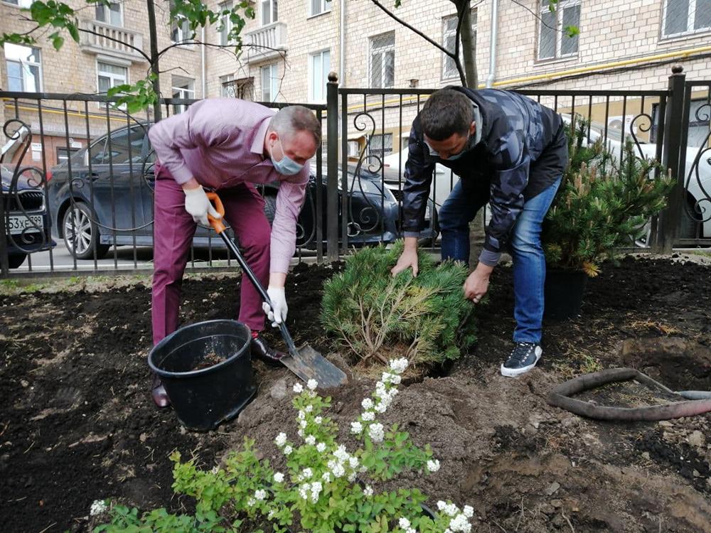 Евгений Попов высаживает деревья