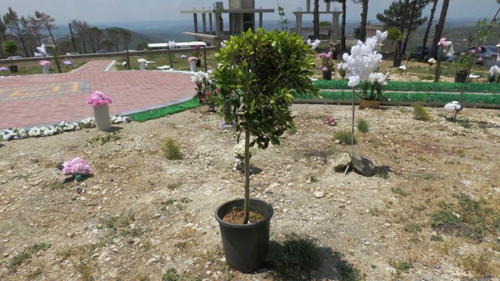Российско-сирийский Парк мира в Сирии