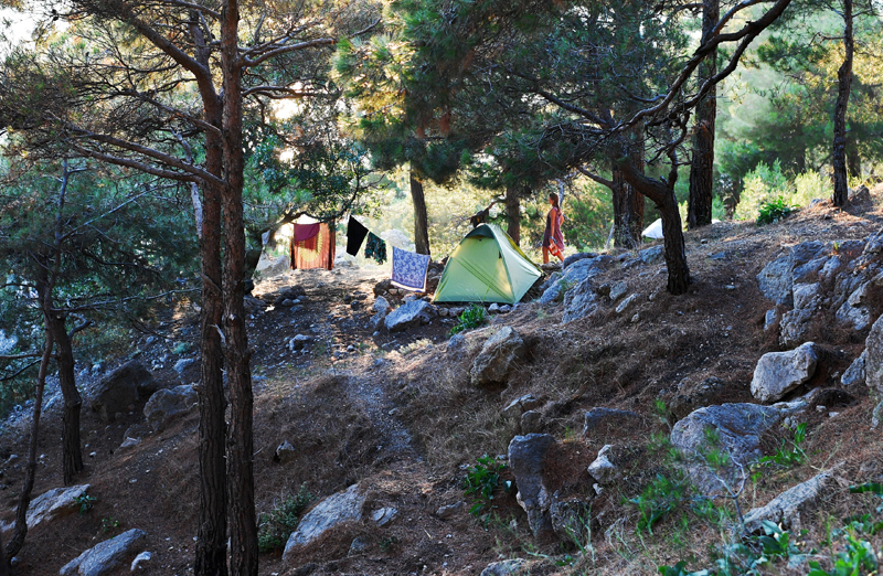 Отдыхающие в лесу