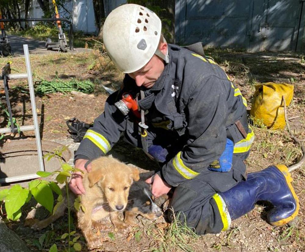 Спасенные щенята