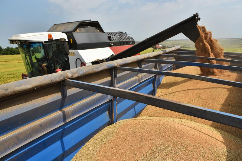 Уборка урожая пшеницы