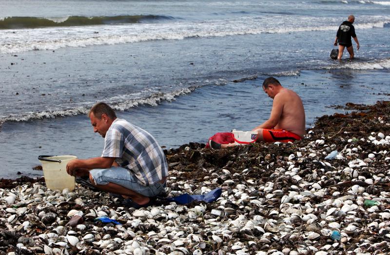 Местные жители собирают моллюсков
