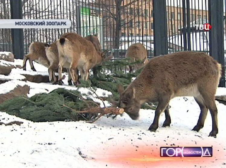 Обитатели Московского зоопарка