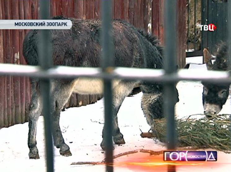 Осел в Московском зоопарке
