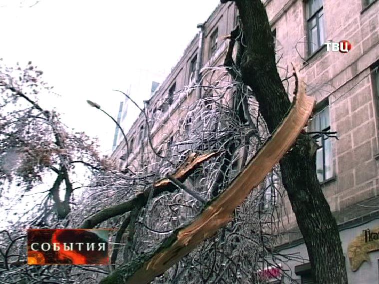 Сломанное дерево в Краснодаре