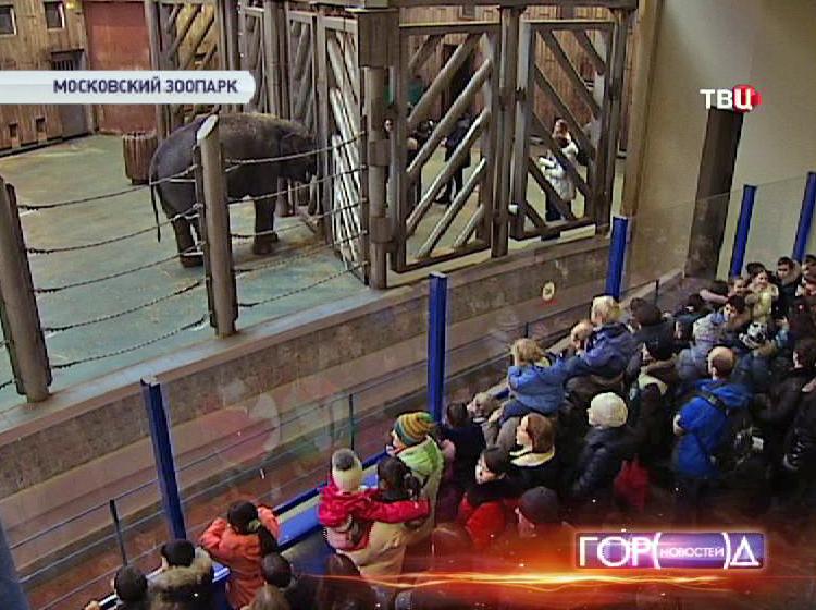 Слоны в зимнем вольере московского зоопарка
