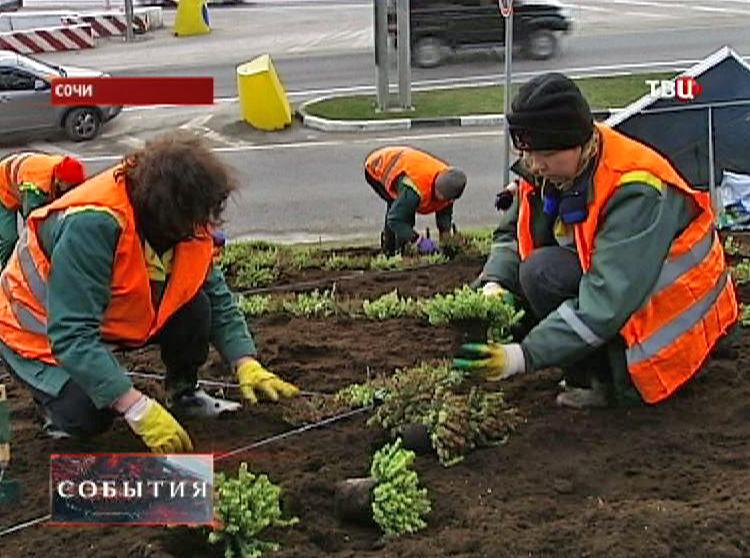 Садоводы сажают цветы к Олимпиаде
