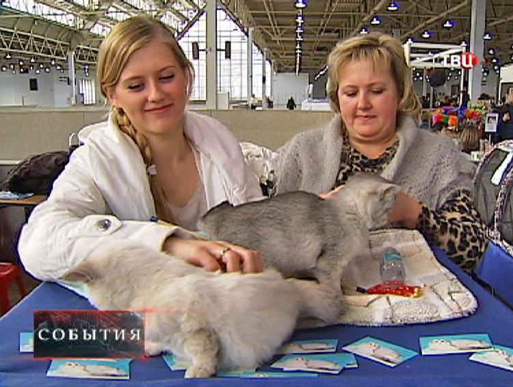 Выставка кошек на ВВЦ
