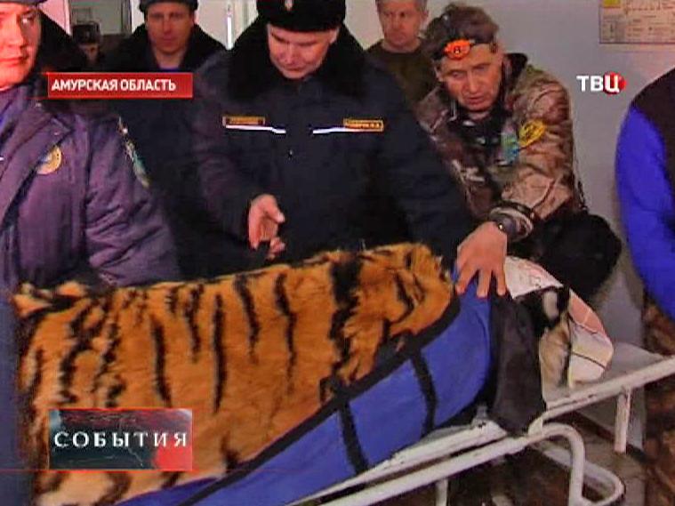 Спасатели оказывают помощь тигру
