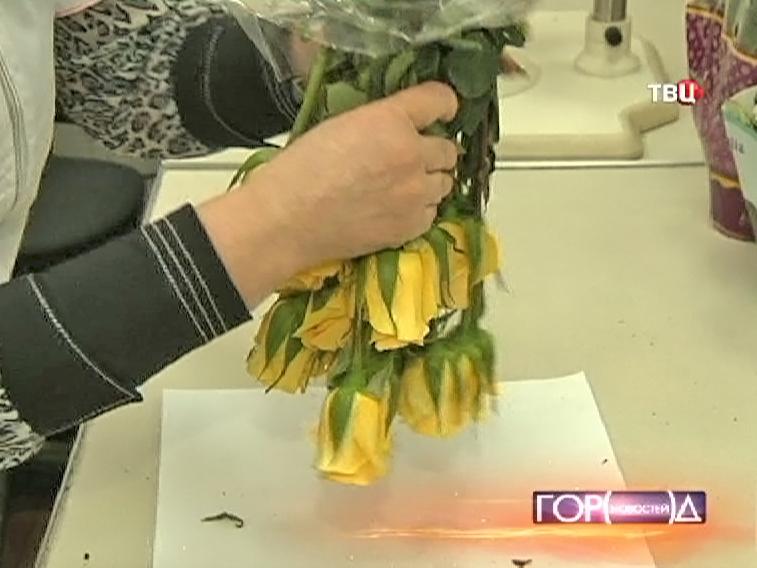 Проверка цветов на наличие паразитов