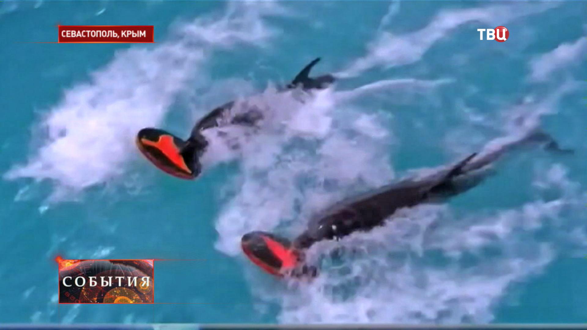 Центр подготовки дельфинов в Севастополе