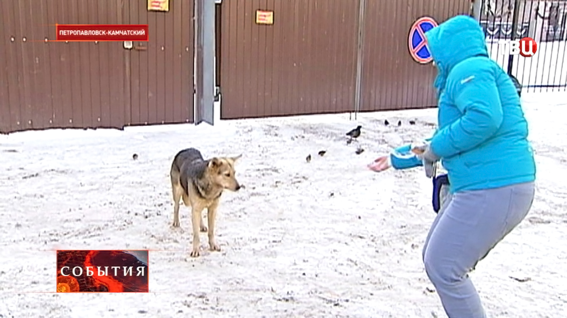 Девушка подкармливает бездомную собаку