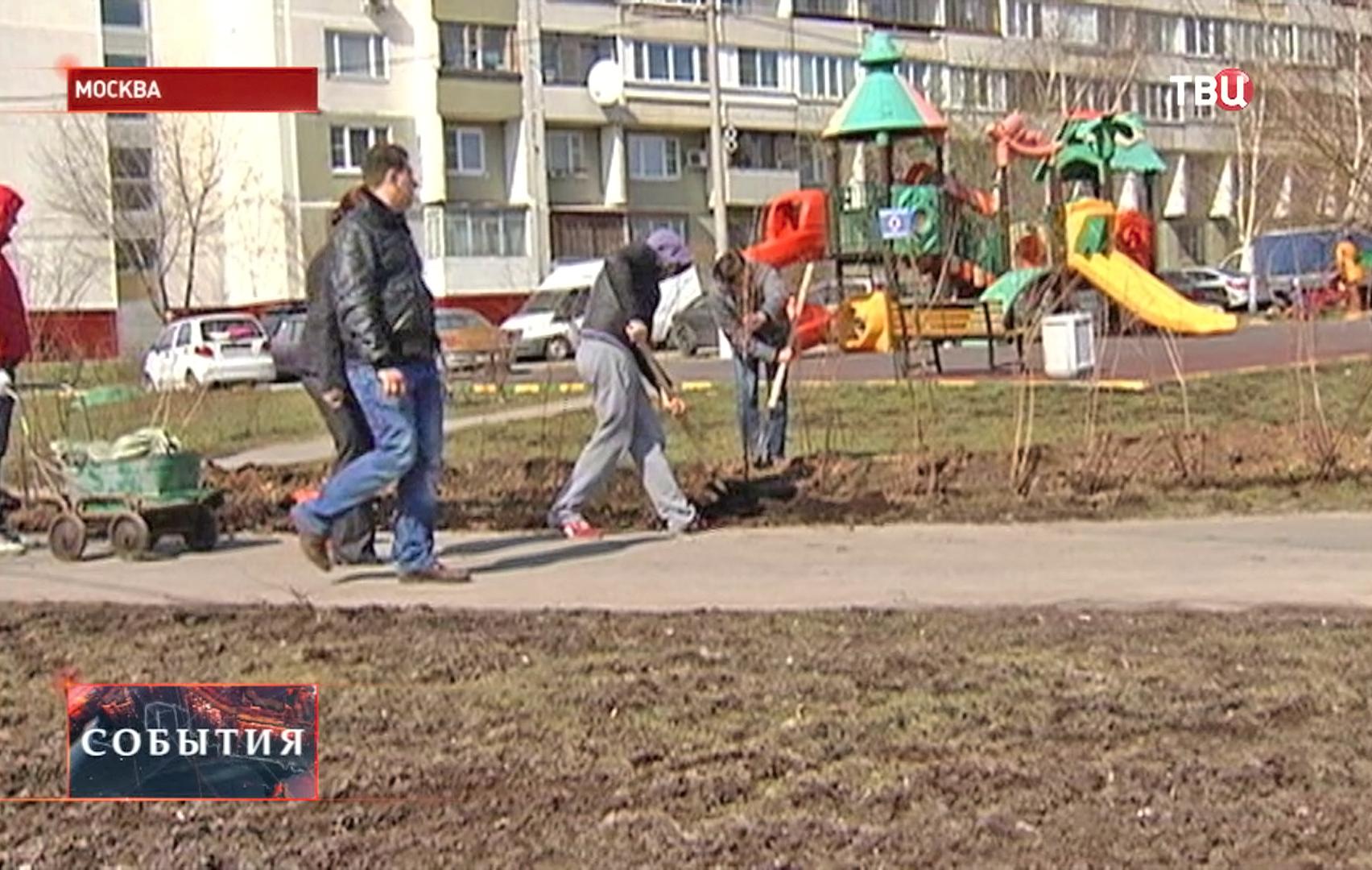 Люди сажают деревья